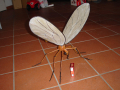 mosquito111