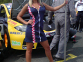 World Touring Car Championship 2008